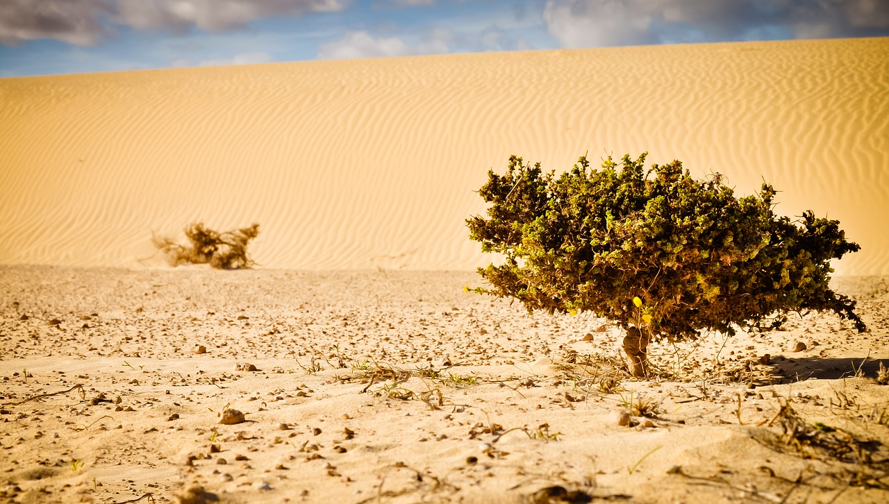 sahara desert plants - 1200×681