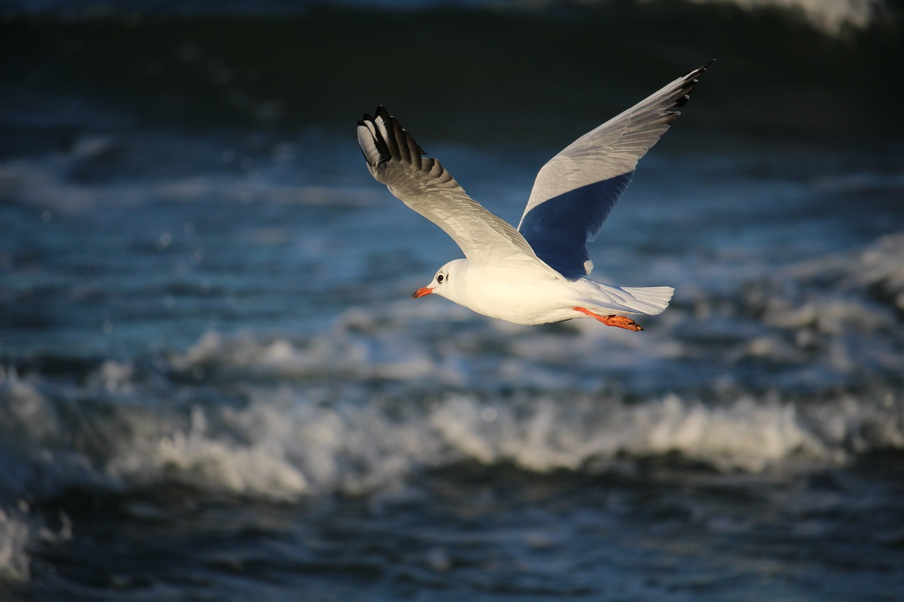 Чашка, картинки чайка над морем