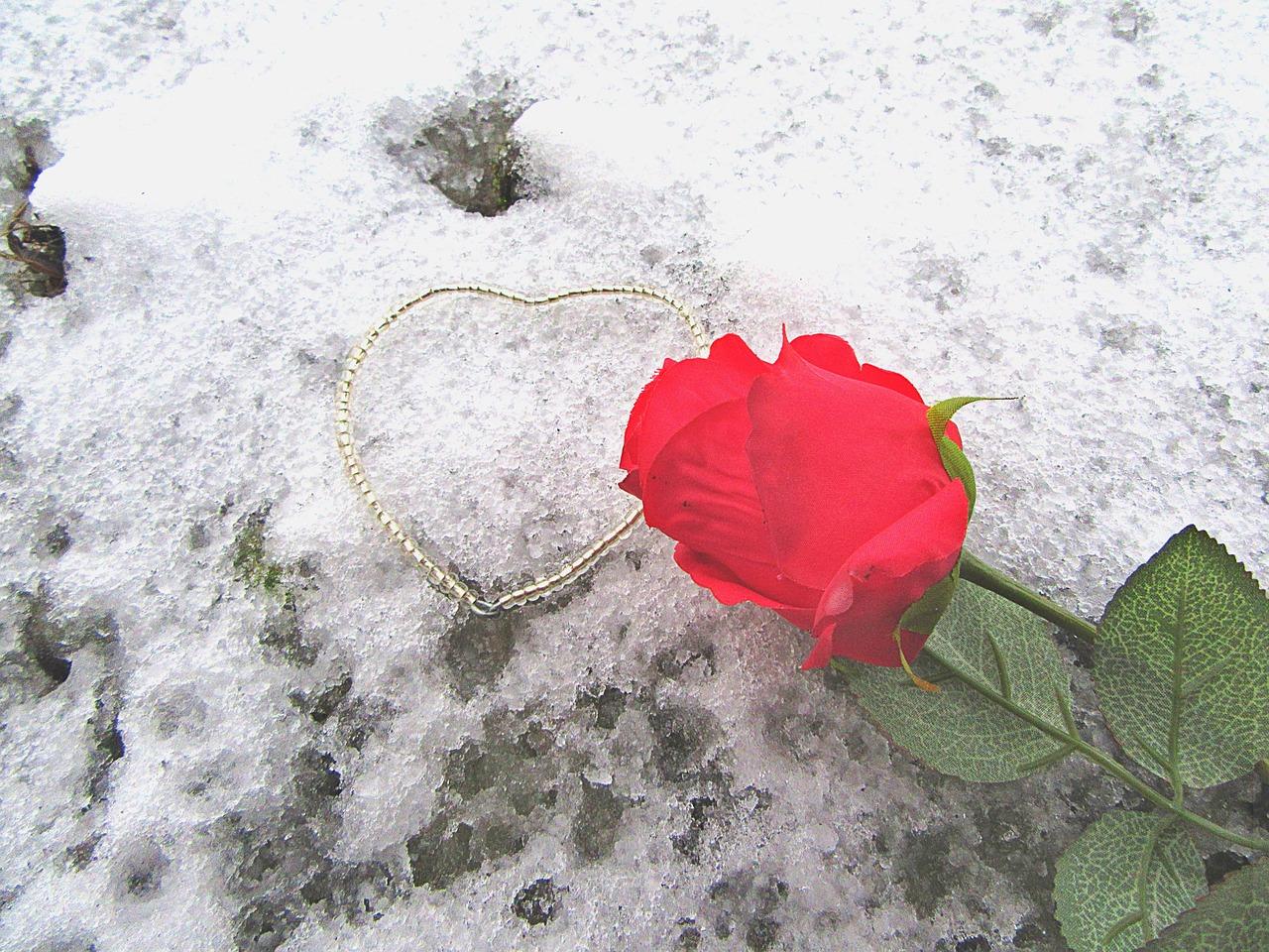 Кунгурского, картинки розы на снегу люблю