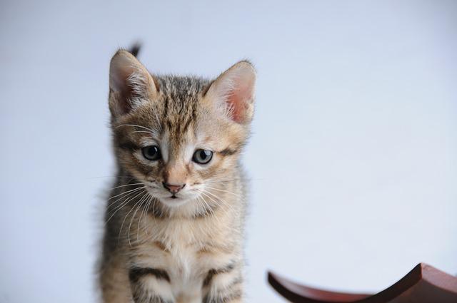 Cat, Small Cat, 貪