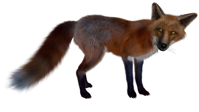 Fuchs, Red Fox, Isolated, Figure, Nature, 3d, Pose