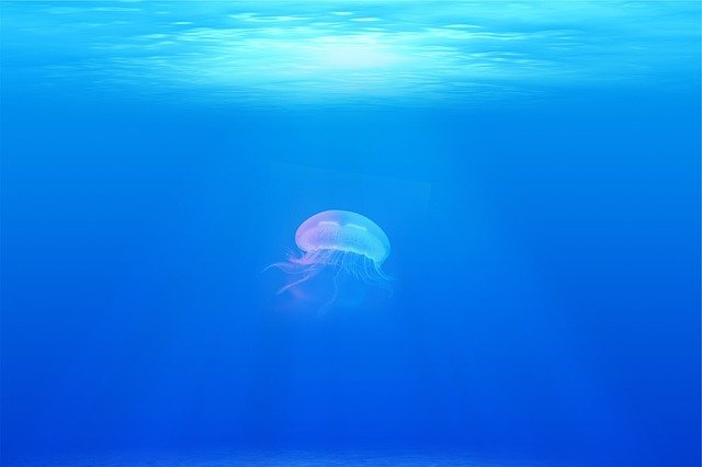 Jellyfish, Under Water, Sea, Ocean, 4k Wallpaper
