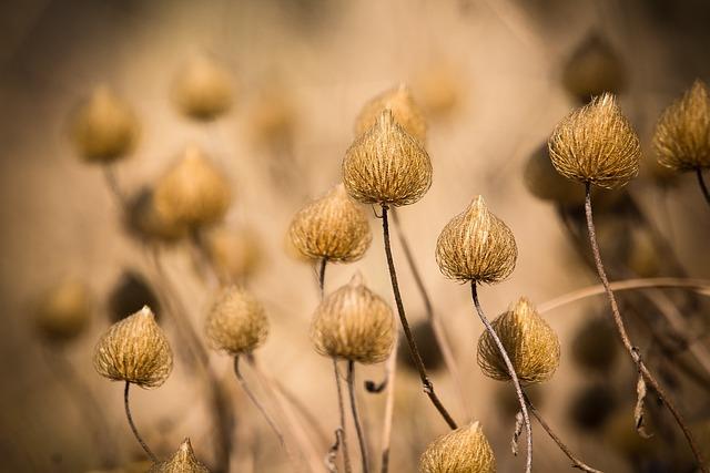 Nature, Flowering Grass, Grass, A Blade Of Grass, Plant