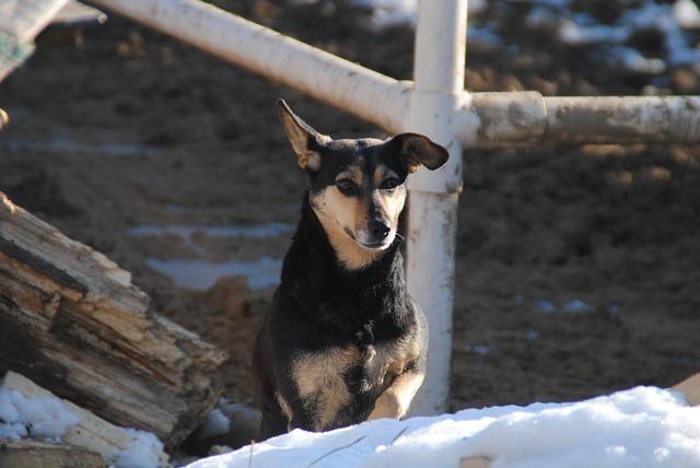 A Cross Between, Dog, Animal, Happy Dog, Outdoors