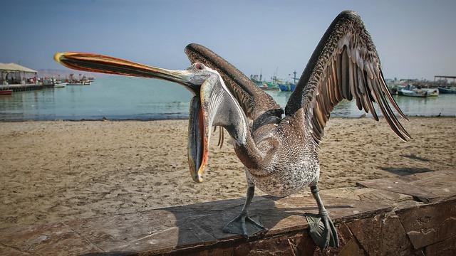 A Hungry Seabirds, The Sea, Panic