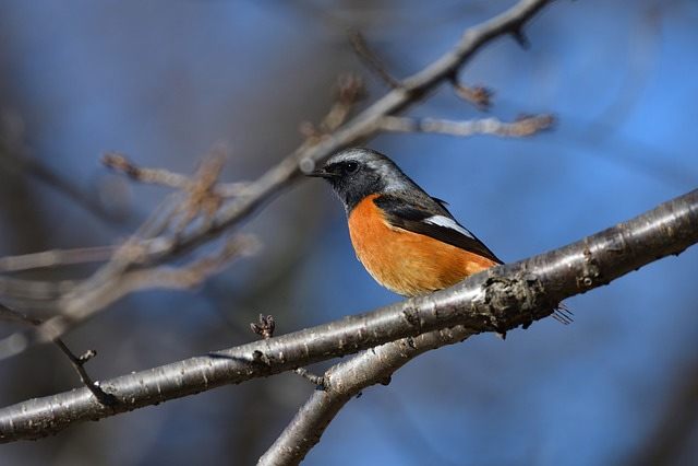 Outdoors, Natural, Wild Animals, Bird, A Key
