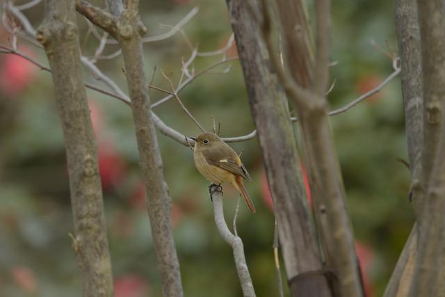 Natural, Wood, Wild Animals, Outdoors, Bird, A Key