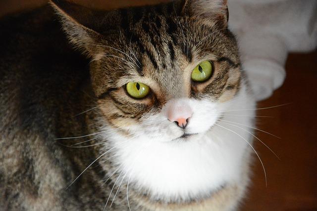 Cat, Kitten, Pet, A Normal Cat, Tabby, Tomcat, Charming