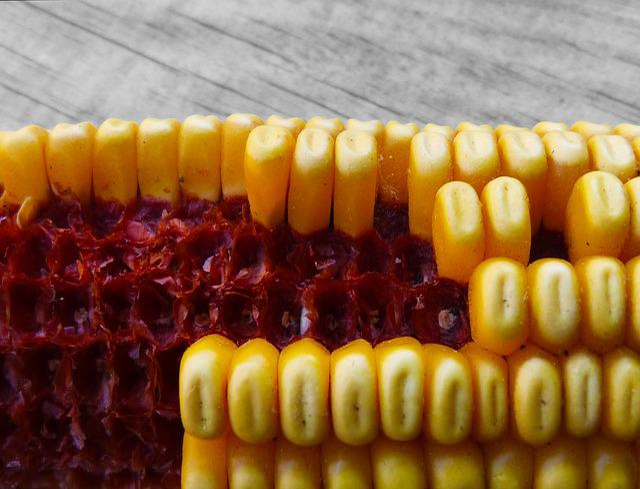 Corn, Panocha, Contrast, Symbol, Metaphor, Abacus