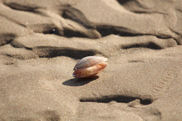 Free photo Abandoned Shells Ocean Sand The Sea Bottom Low Tide