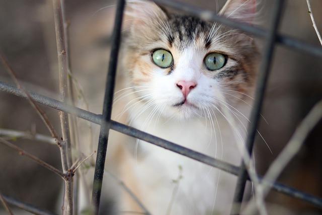 Cat, Coloring, Pet, About