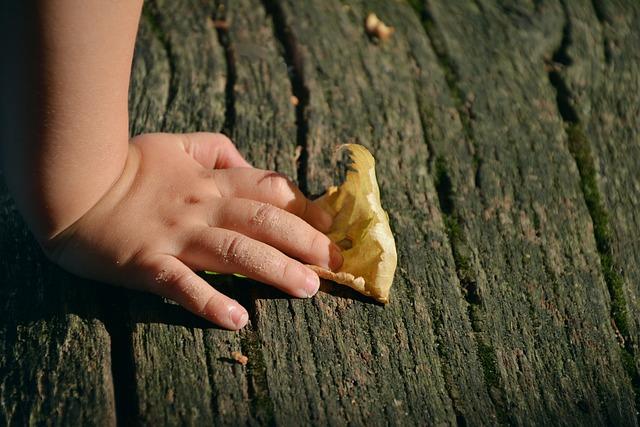 Hand, Child's Hand, Access, Leaf, Autumn, Wood Plank