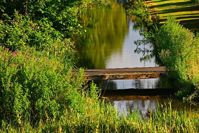 Ditch, Water, Water Filled Ditch, Plank, Across, Banks
