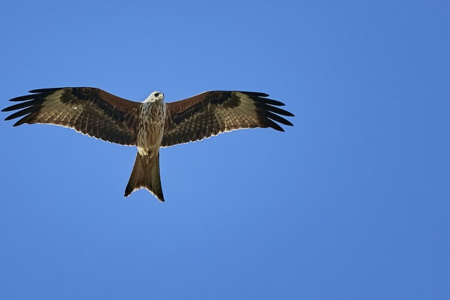 Bird, Bird Of Prey, Nature, Animal World, Adler