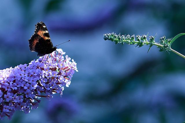 Spring, Butterfly, Rusalka, Admiral, Kid Stories