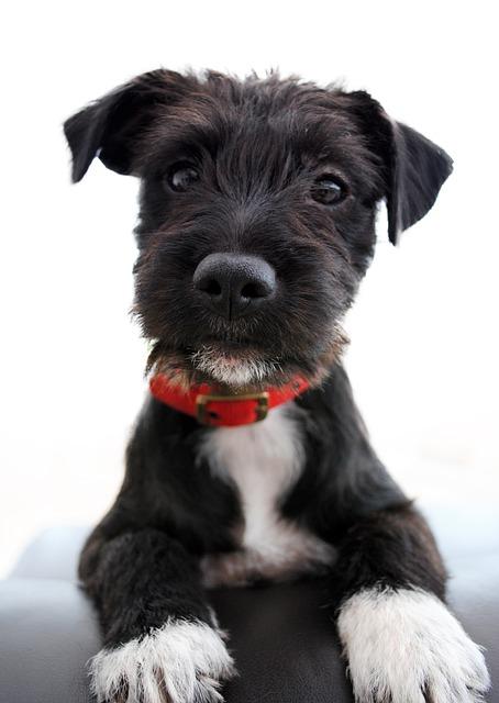 Adorable, Cute, Collar