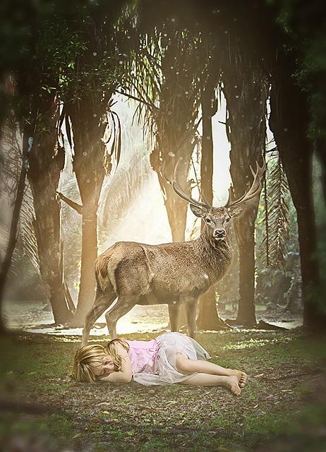 Deer, Jungle, Animal, Nature, River, Adventure, Trees