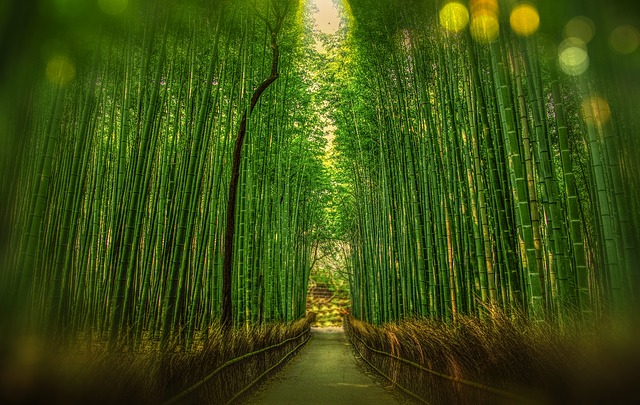 Kyoto, Japan, Bamboo, Bokeh, Adventure, Forest, Travel