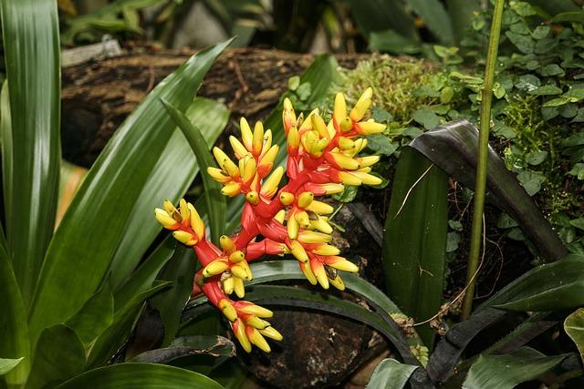 Bromeliad, Aechmea, Flower, Plant, Flora, Garden