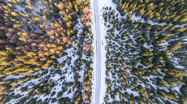 Drone, Aerial, Aeriel, Pines, Autumn, Winter, Snow