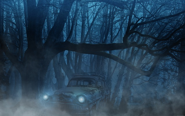 Auto, Forest, Fog, Trees, Aesthetic, Weird, Mystical