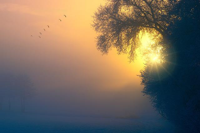 Fog, Dawn, Birds, Tree, Aesthetic, Sunset, Sun, Sky