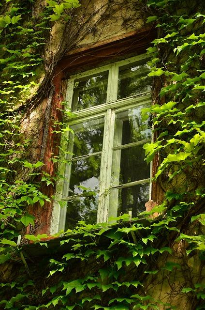 Window, Old Window, Aesthetic, Leaves, Overgrown