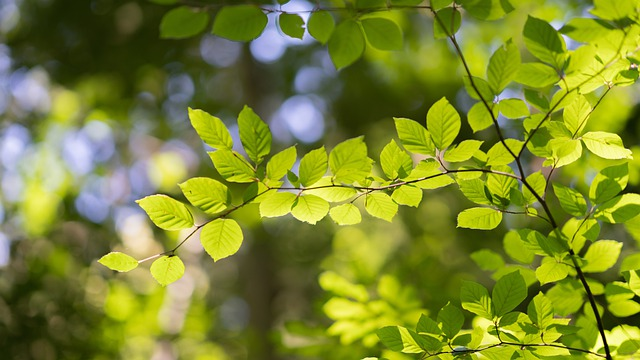 Leaves, Aesthetic, Tree, Forest, Light, Bright, Sun