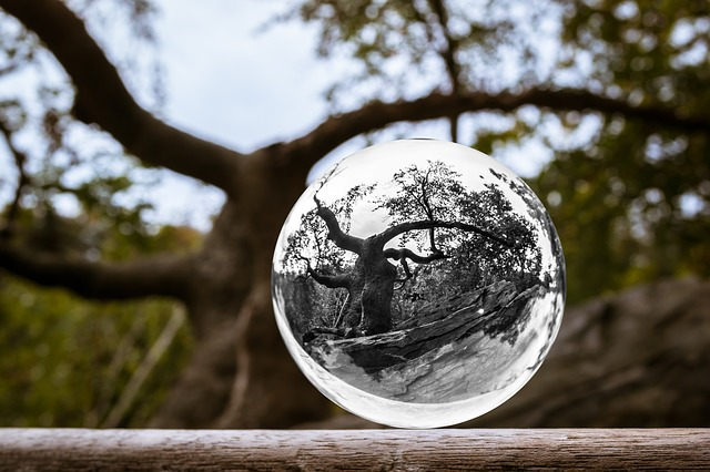 Glass Ball, Tree, Ball, Aesthetic, Forest, Photo Sphere