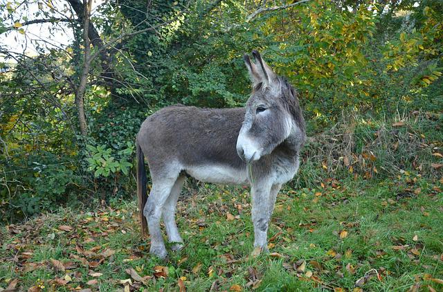 Donkey, Young Ass, Equine, Tenderness, Affection