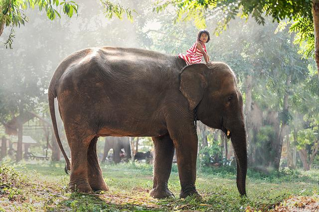 Kids, Africa, Animals, Asia, Affiliations