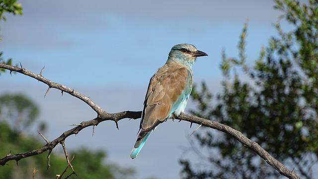 Birds, Nature, Wildlife, Beak, Pity, Bird, Africa