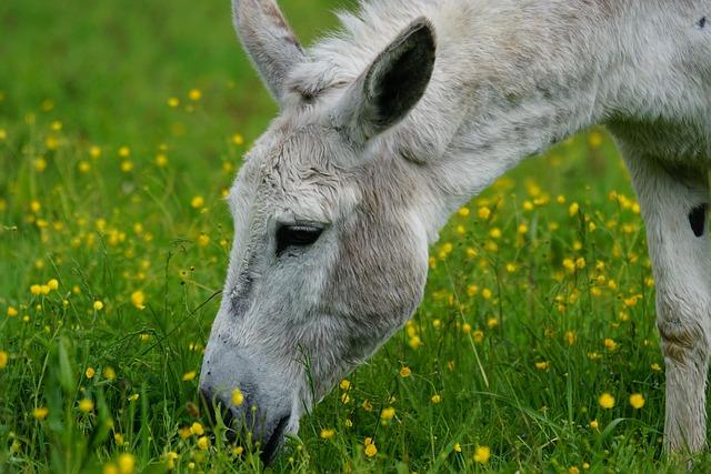 Donkey, Domestic Donkey, Perissodactyla, Africa