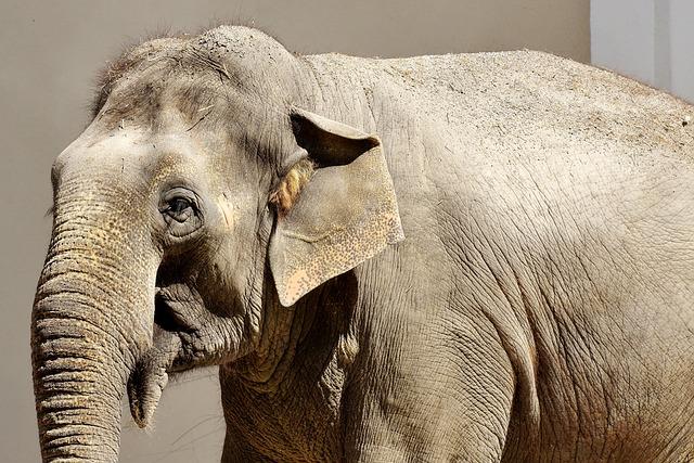 Elephant, Pachyderm, Animal, Animal Portrait, Africa