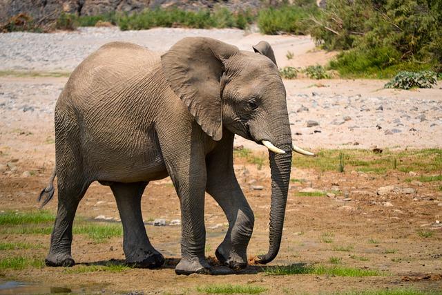 Elephant, Africa, Namibia, Water