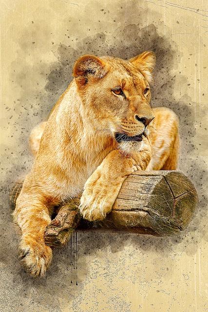 Africa, Animal, Big, Brown, Carnivore, Cat, Eye, Face