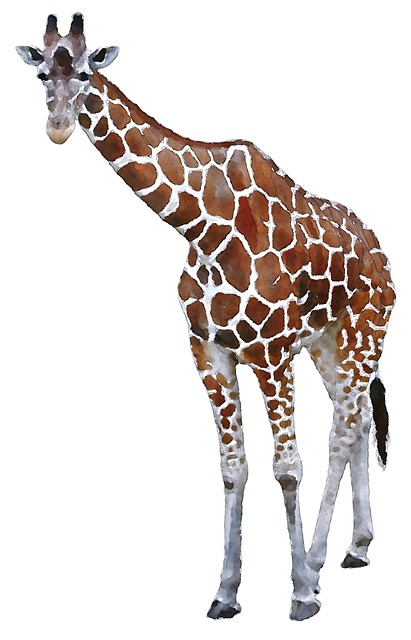 Giraffe, Africa, Watercolor, Animal, Oekaki