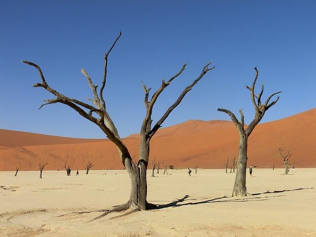 Namibia, Africa, Sossusvlei, Drought, Clay Pan, Dune
