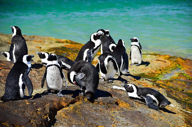 Boulders Beach, South Africa, Nature, African Penguins