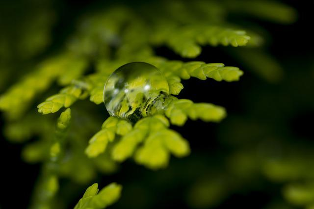 Water Drop, After Rain, Nature, Green, Reflection