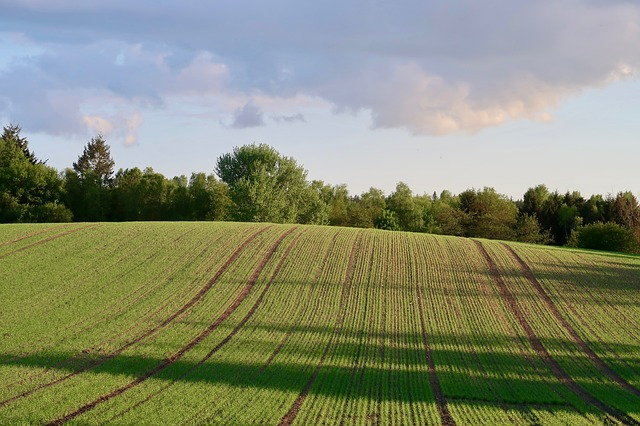 Field, Agriculture, Arable, Sky, Spring, Agricultural
