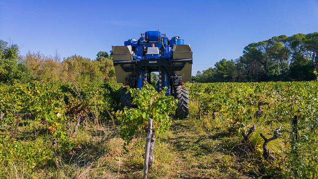 Harvest, Grape Harvesting Machine, Agricultural Machine