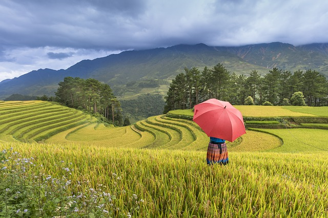 Adult, Adult Only, Agriculture, Asia, The Hat