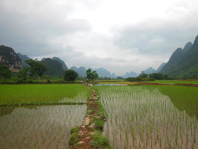 Yunnan, Rice Field, China, Field, Agriculture