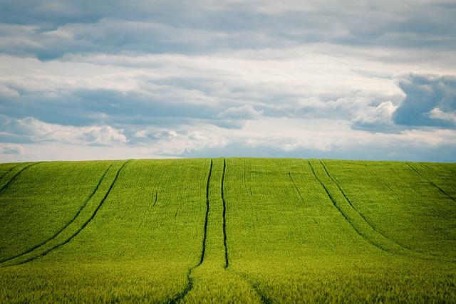 Barley, Barley Field, Cornfield, Grain, Agriculture