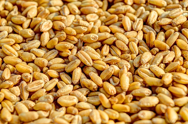 Wheat, Grain, Agriculture, Seed, Crop, Food, Golden