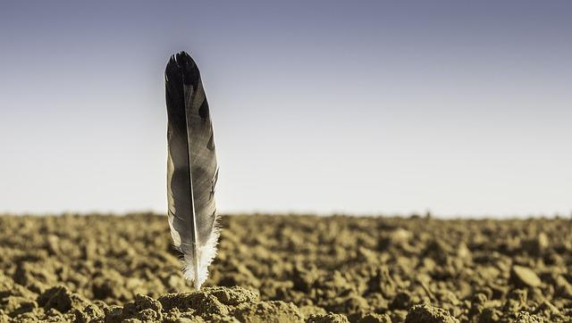 Feather, Arable, Foresight, Agriculture, Nature, Fields