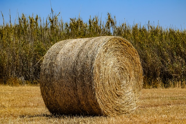Hay, Agriculture, Straw, Farm, Nature, Bale, Rural