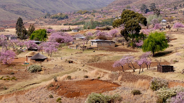 Lesotho, Bergdorf, Peach Blossom, Agriculture, Spring