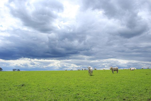 Lawn, Nature, Agro-industry, Panoramic, Field, Sky